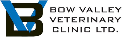 Bow Valley Veterinary Clinic | Brooks, AB