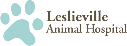 Leslieville Animal Hospital