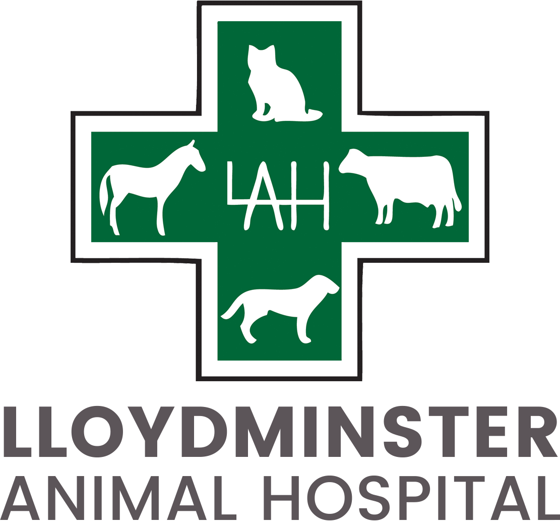 Welcome To Lloydminster Animal Hospital