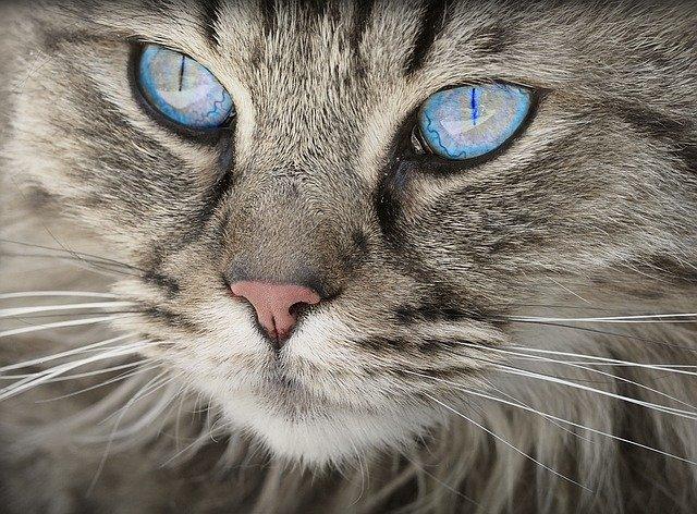 The Purr-fect Cat Carrier