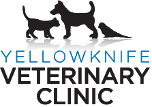 Veterinarians in Yellowknife, NT | Yellowknife Veterinary Clinic
